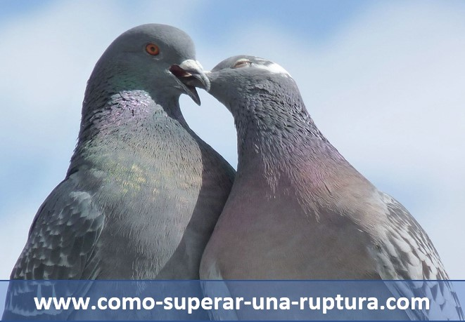 https://www.como-superar-una-ruptura.com;