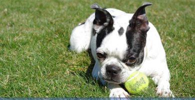 Se murió mi perro y estoy muy triste